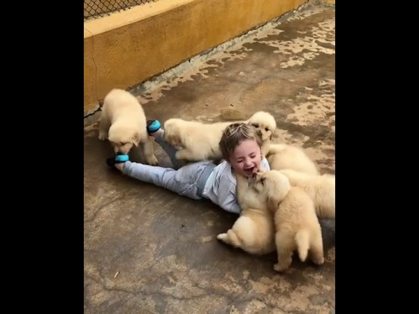 Toddler Gleefully Rolls on the Ground with a Bunch of Puppies - 998619