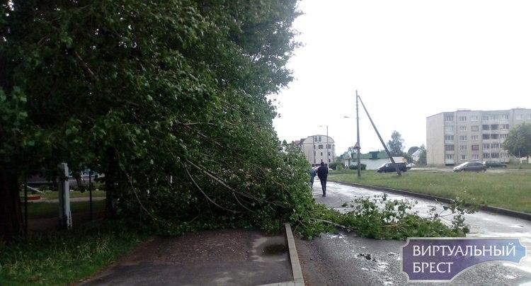 В Бресте опять упала ветка, на этот раз никто не пострадал