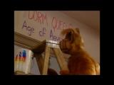 Alf Quote Season 2  Episode  24_Не испачкался