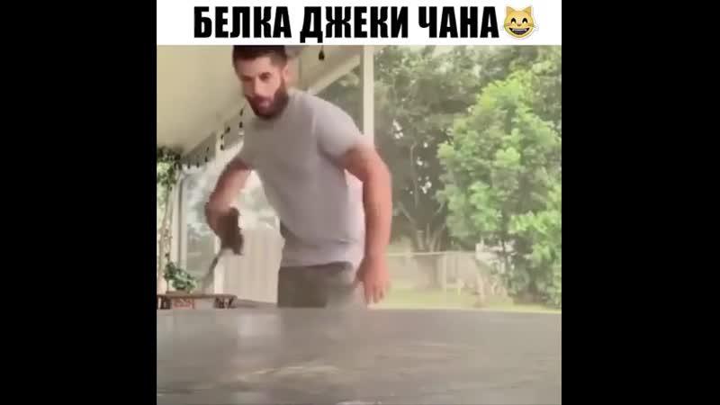 Кунг фу белка😆