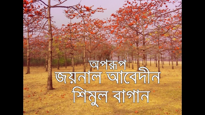 How to go Zainul Abedin Shimul garden shunamgonj । must see । শিমুল বাগান । লাকমা ছড়া ।