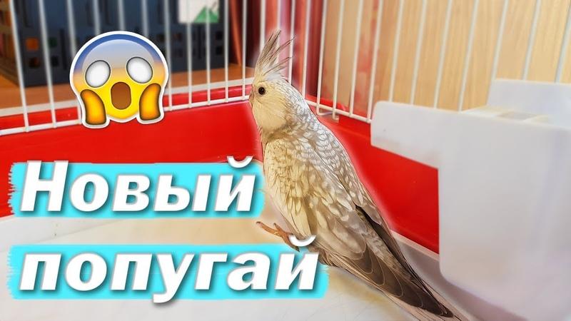 НОВЫЙ ПОПУГАЙ! Карантин и адаптация попугая. Купили пару для Рокки. | Рокки Life