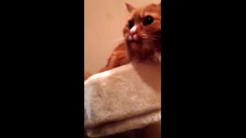 кот и липкая лента