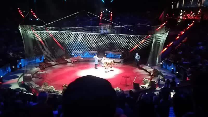 В цирке братьев Запашных