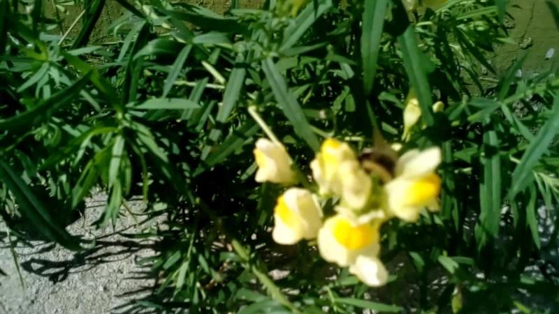 Цветы сквозь битон