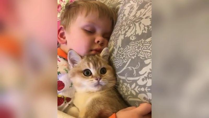 Приколы с котами,котятами и другими животными 14 Jokes with cats, kittens and other animals