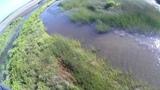 BIG CROC in LAMA LAMA LAND, CAPE YORK. Огромный крокодил в реке. Лама Лама Ленд,Мыс Йорк, Австралия