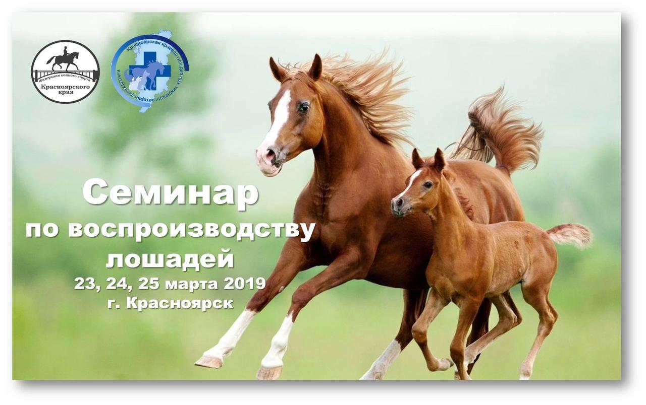 Афиша Красноярск Семинар по воспроизводству лошадей 2019 г.