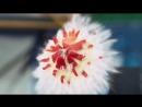 Фейерверк-шоу фруктами в Slow Motion (хорошее настроение, красота, салют из фруктов, яблоки, опыты, фрукты, студенты, наука).