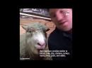 Le coin des bonnes nouvelles : Un sanctuaire pour les animaux issus des fermes