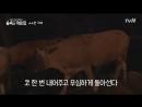 9 эп Шинни и коровы Little House in the Forest 박신혜의 야외 저녁식사에 몰래온 손님, ′소′ 180601 EP.9