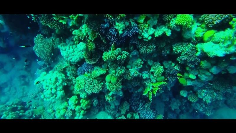 Подводный мир Красного моря Underwater world of Red Sea