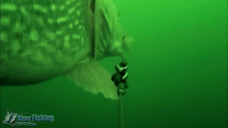 АТАКА ЩУКИРекордная Зубастая Подводная Съемка
