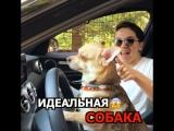 Собака - лучший друг человека??
