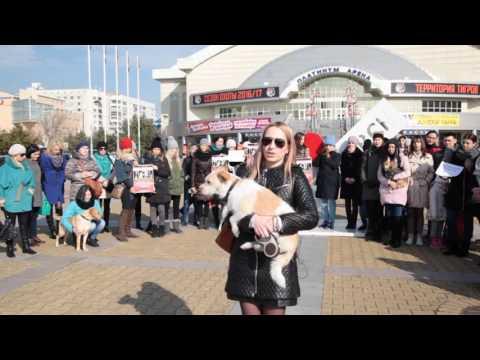 2016.10.25 Видеообращение зоозащитников к президенту