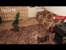 Кошка играет с новогодней елкой смешные животные видео 18