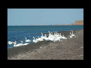 Крым- Лебяжьи острова