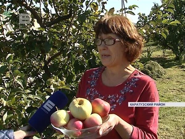 Яблочный рай (Енисей Минусинск)