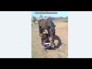 Мир лошадей !