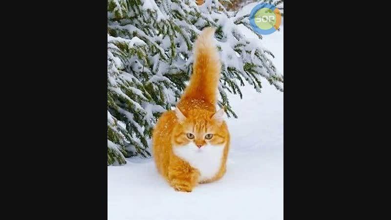 Утром кот принес на лапах снег In the morning the cat brought snow to his feet