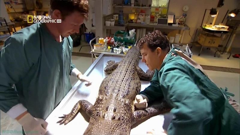 Когда крокодилы ели динозавров Познавательный исследования палеонтология 2009