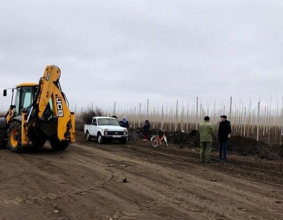 В Адыге-Хабльском районе высадили более 60 гектар яблоневого сада
