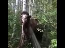Поохотился на уток. Охотник встретил в лесу верблюда. Живой анекдот на охоте.