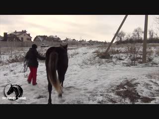 mustangs_notes | зимняя прогулка с Нуаром