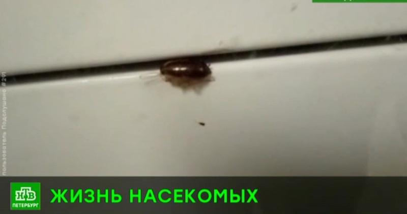 В школе на юго-западе Петербурга не могут справиться с нашествием тараканов