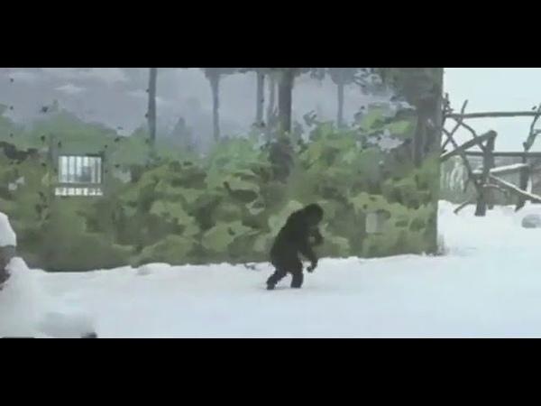 Планета обезьян...