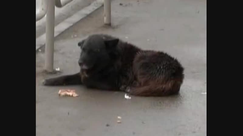 Историю самого преданного пса из Челябинска увековечили в Первоуральске