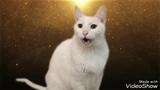 Коты Поют Деспасито- The Cats Sings Despasito- Попробоуй Не Посмеяться- CHALLENGE