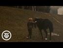 Рыжий, серый, вороной и всадница. О чемпионке по конному спорту Елене Петушковой (1986)