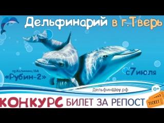 Шоу Черноморских дельфинов в Твери 2018