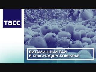 Витаминный рай в Краснодарском крае