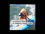 Чемпионат мира по сёрфингу среди собак