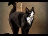 Черный кот Веселые детские песни