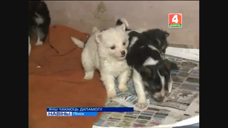 В Пинске волонтеры нашли собаку и 11 щенков, едва не замерзших от холода. Теперь малыши ищут дом
