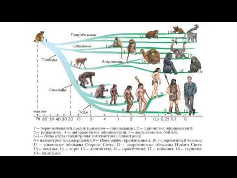 Эволюция и передача навыков