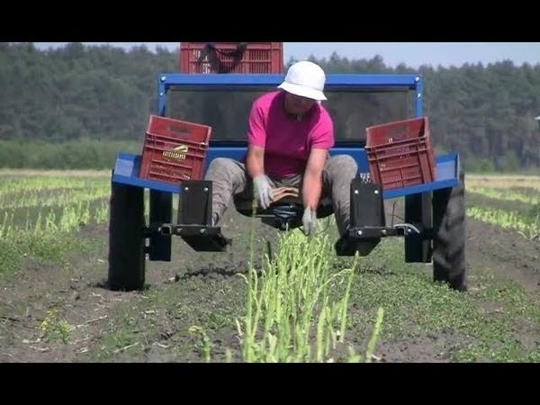 Technology equipment Asparagus harvesting machine
