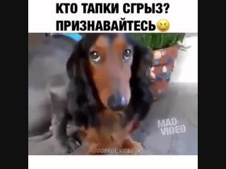 Братья наши меньшие.mp4