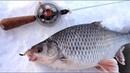 Плотва на сырный кубик Рыбалка в палатке