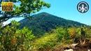 Звуки природы: шум леса и пение птиц. 8 часов для сна и релаксации