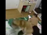 Когда у тебя дома живет собака