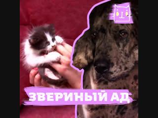 Слепого котенка и собаку нашли в заброшенном доме