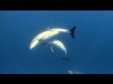 Арина и РАЗМЕР project - Синее море