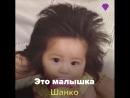 Малышка Шанко cтала настоящей звездой интернет