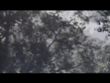 Psychotic Gardening Experimental BlackDoom Metal Country Canada - Searing Cital Official Music Video