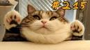 КОТЫ 2019 Смешные коты приколы с котами до слез – Смешные кошки – Funny Cats