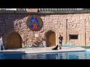 Дельфинарий Адлер 13 Танец котика
